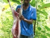 jamaican-recipes-goat-preparing-butcher-jerk-curry
